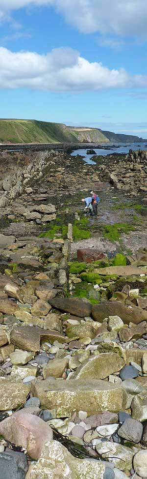 Foreshore at Burnmouth