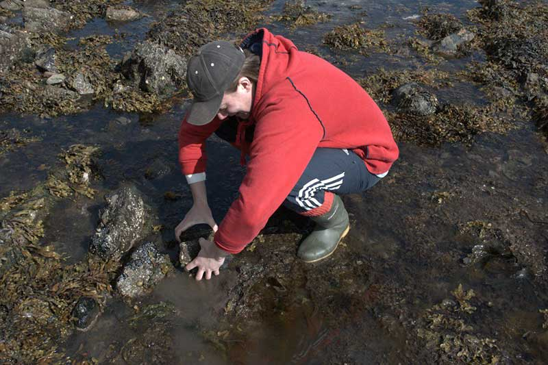 Struan Henderson removing a specimen by hand.