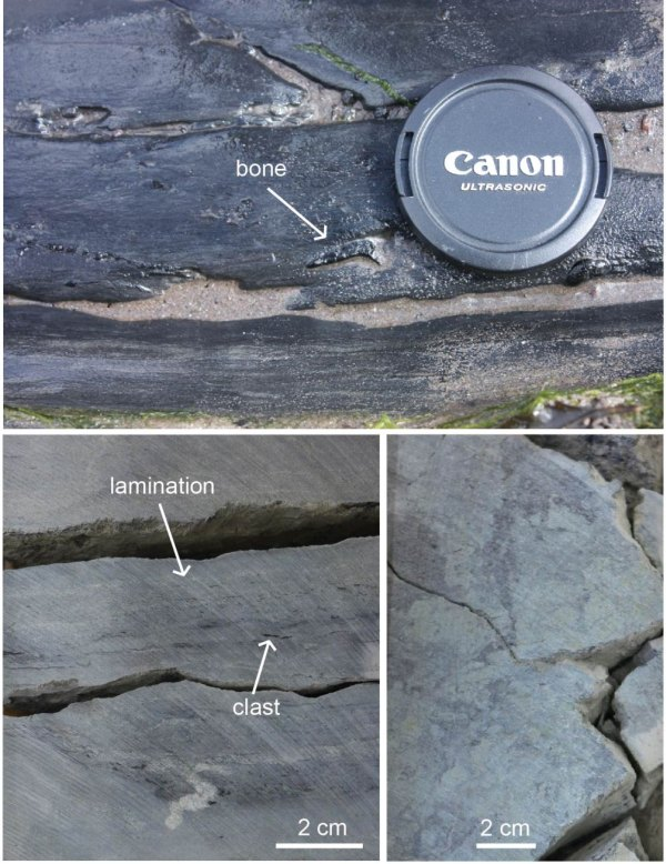 Examples of sandy siltstones